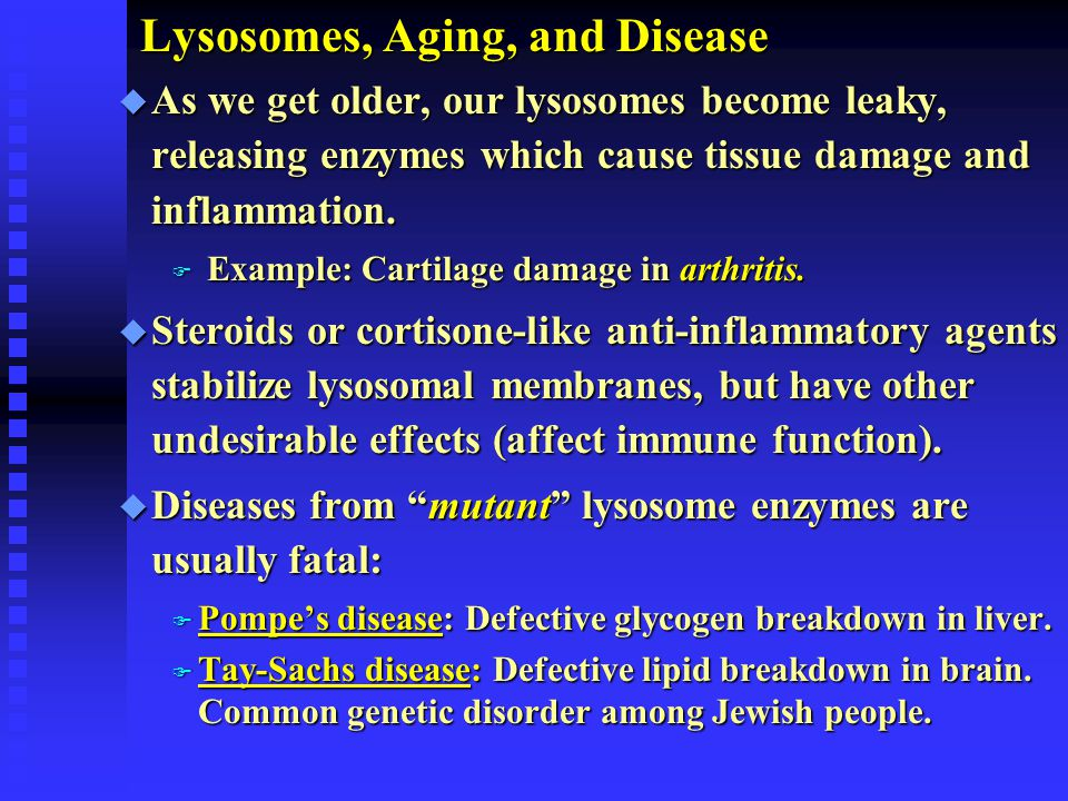 Lysosomes, Aging, and Disease Lysosomes, Aging, and Disease u As we get older, our lysosomes become leaky, releasing enzymes which cause tissue damage