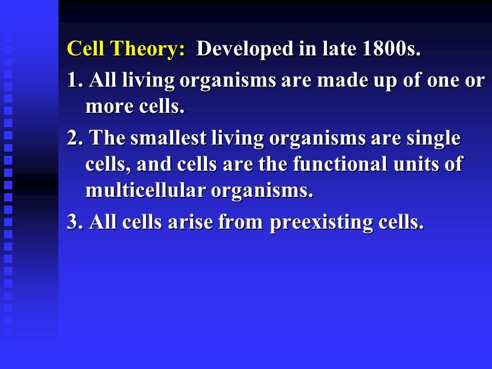 Eucaryotic Cells u Include protist, fungi, plant, and animal cells.
