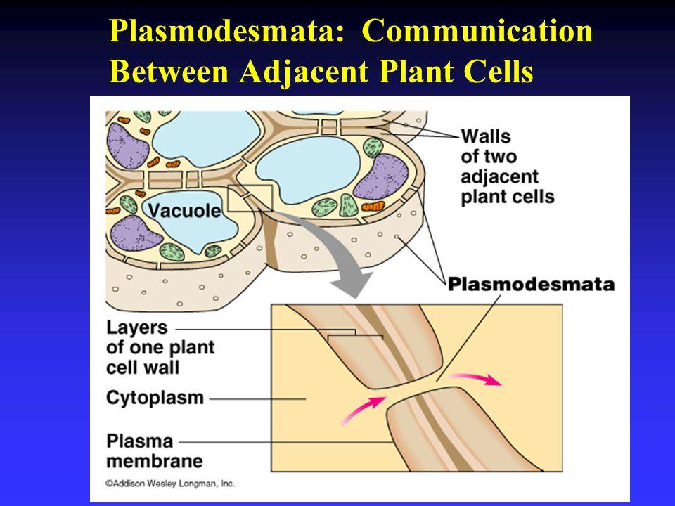 Plasmodesmata: Communication Between Adjacent Plant Cells