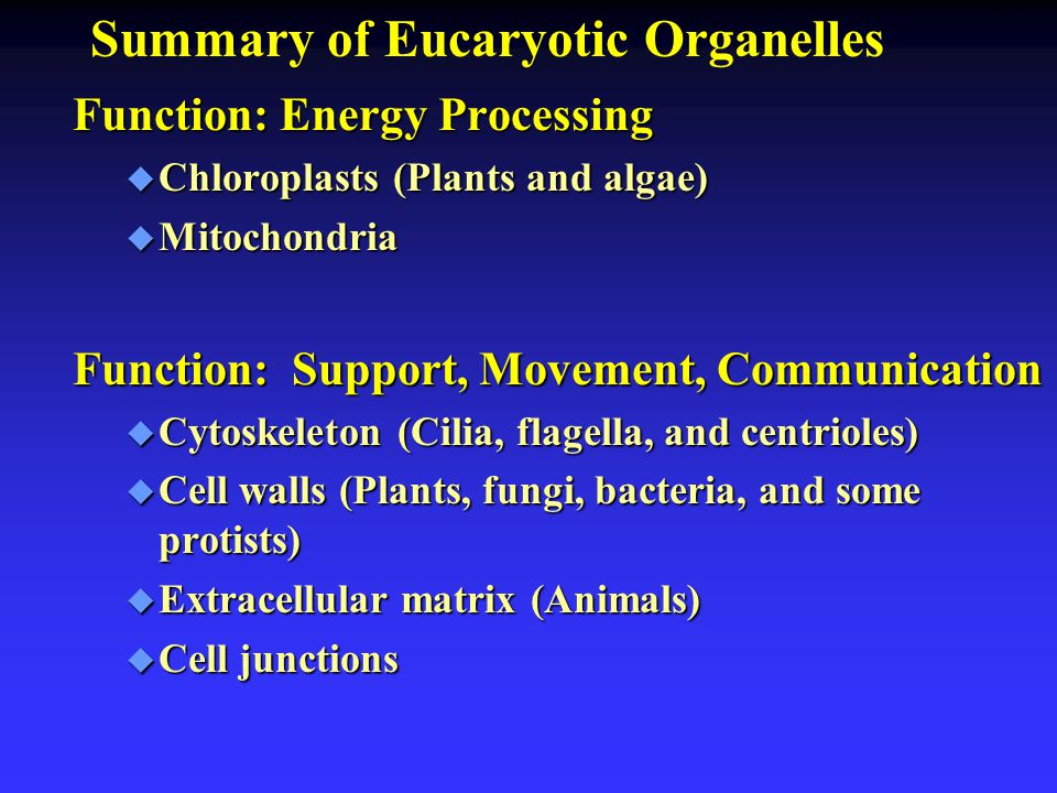 Summary of Eucaryotic Organelles Function: Energy Processing u Chloroplasts (Plants and algae) u Mitochondria Function: Support, Movement, Communicati