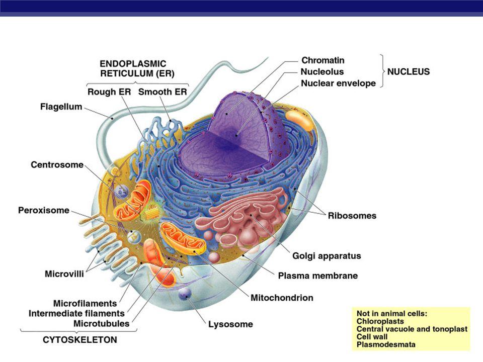 AP Biology 2005-2006
