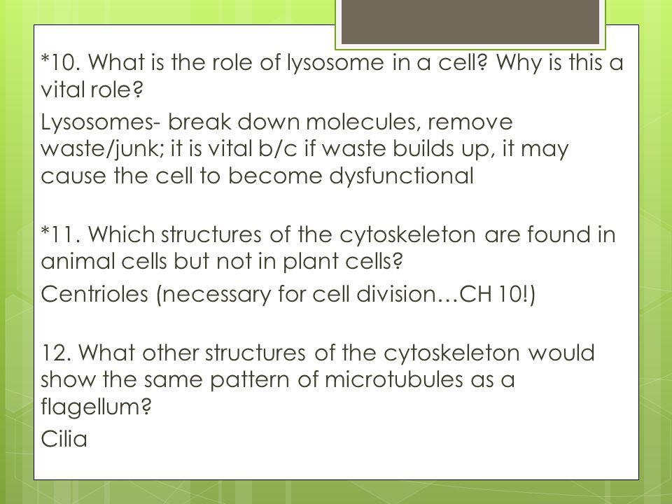 *10. What is the role of lysosome in a cell? Why is this a vital role? Lysosomes- break down molecules, remove waste/junk; it is vital b/c if waste bu