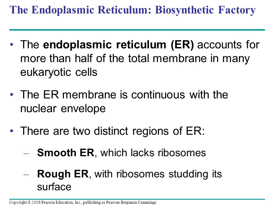 The Endoplasmic Reticulum: Biosynthetic Factory The endoplasmic reticulum (ER) accounts for more than half of the total membrane in many eukaryotic ce