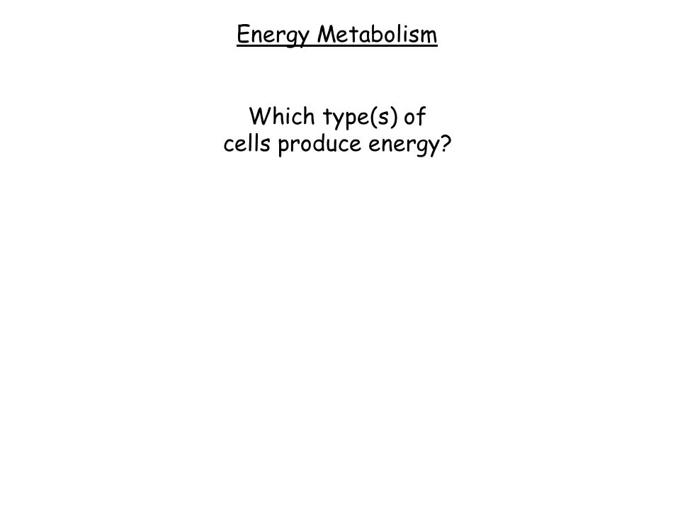 Energy Metabolism Which type(s) of cells produce energy?
