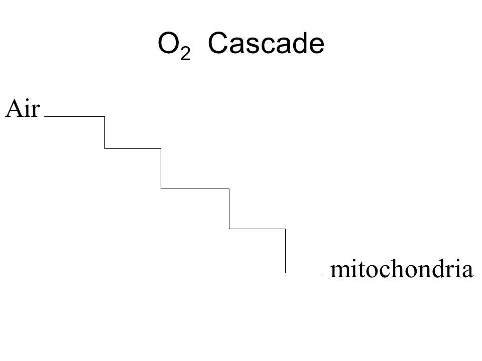 O 2 Cascade Air mitochondria