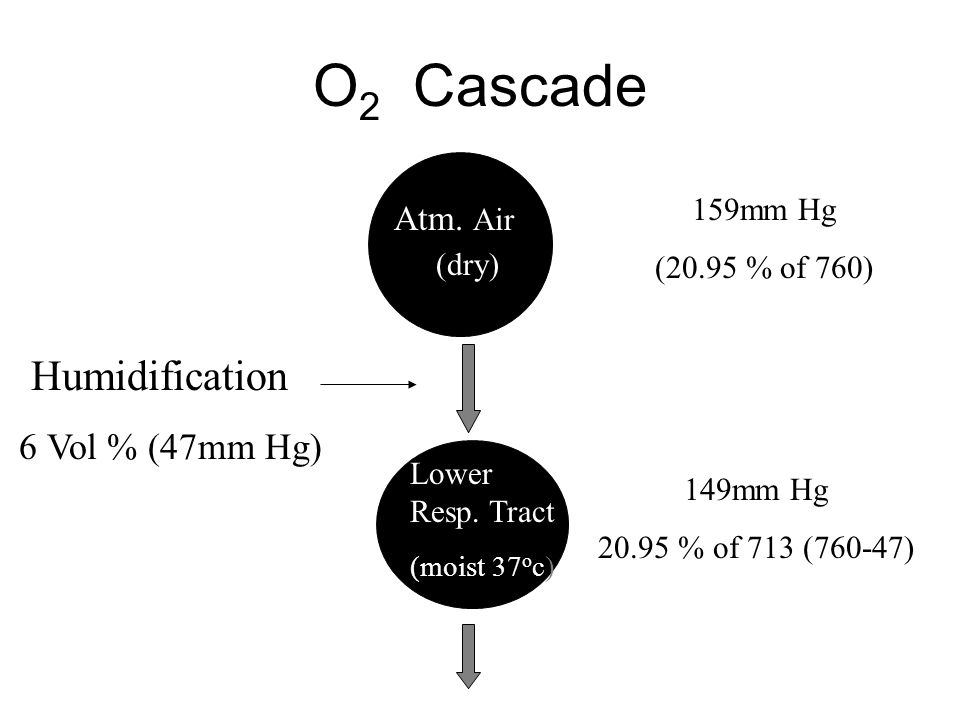 O 2 Cascade Atm. Air (dry) Lower Resp. Tract (moist 37 o c) 159mm Hg (20.95 % of 760) 149mm Hg 20.95 % of 713 (760-47) Humidification 6 Vol % (47mm Hg