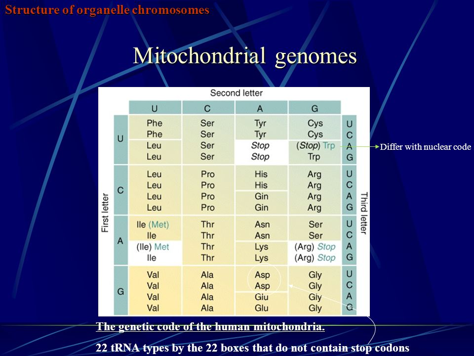 Mitochondrial genomes Structure of organelle chromosomes The genetic code of the human mitochondria. 22 tRNA types by the 22 boxes that do not contain