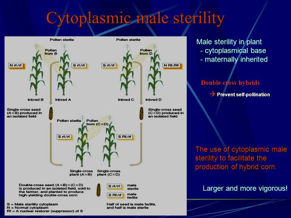 Cytoplasmic male sterility The use of cytoplasmic male sterility to facilitate the production of hybrid corn.