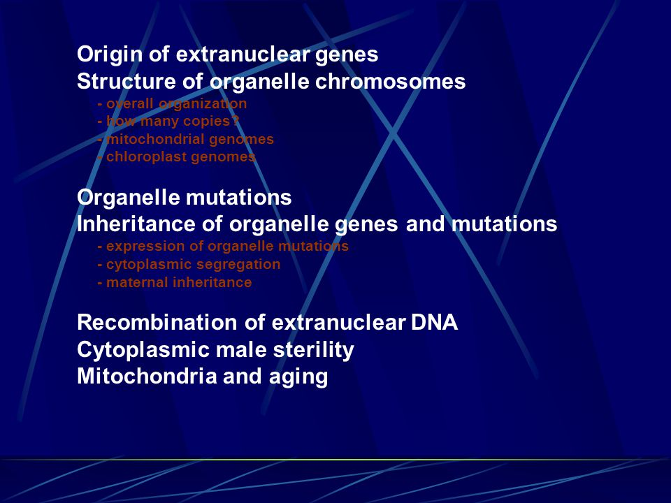 Origin of extranuclear genes Structure of organelle chromosomes - overall organization - how many copies.