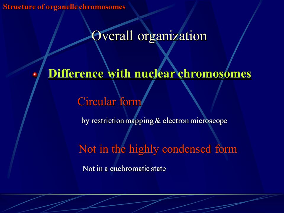 Structure of organelle chromosomes Overall organization Difference with nuclear chromosomes Difference with nuclear chromosomes Circular form Circular form by restriction mapping & electron microscope by restriction mapping & electron microscope Not in the highly condensed form Not in the highly condensed form Not in a euchromatic state Not in a euchromatic state