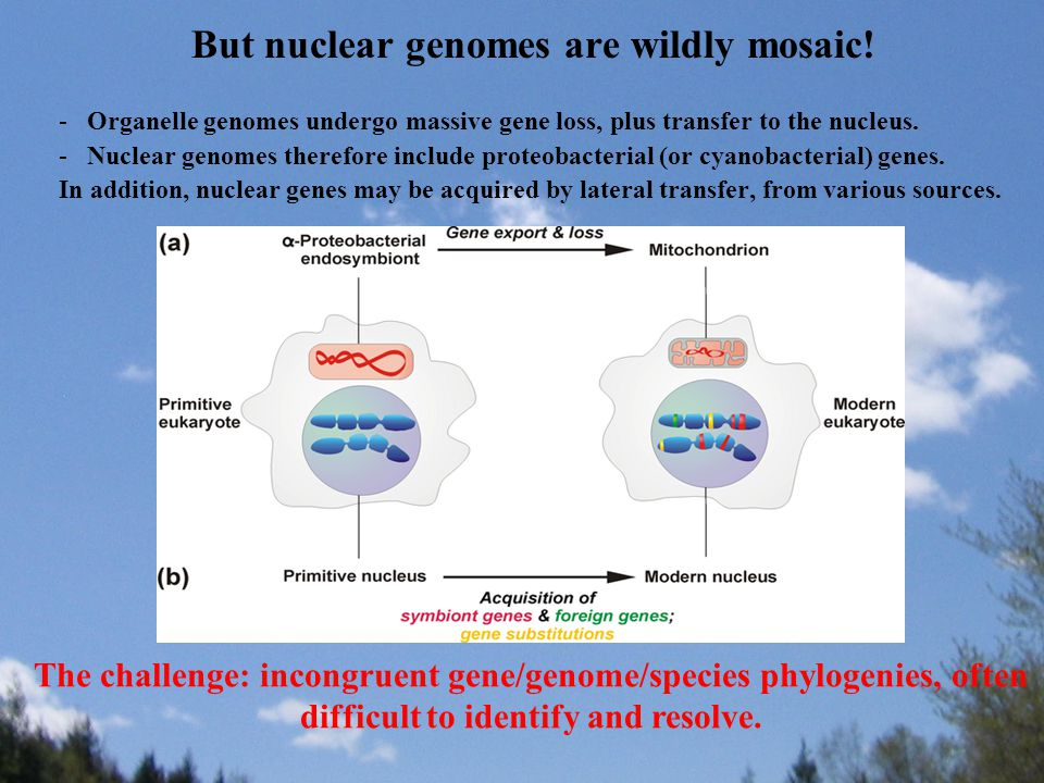 But nuclear genomes are wildly mosaic.