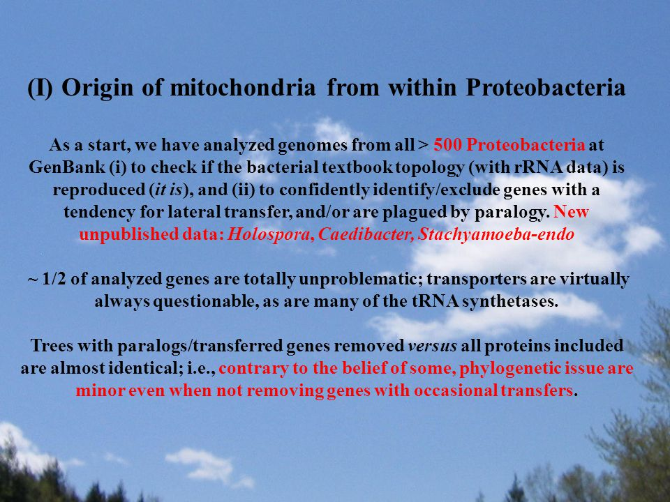 (I) Origin of mitochondria from within Proteobacteria As a start, we have analyzed genomes from all > 500 Proteobacteria at GenBank (i) to check if the bacterial textbook topology (with rRNA data) is reproduced (it is), and (ii) to confidently identify/exclude genes with a tendency for lateral transfer, and/or are plagued by paralogy.