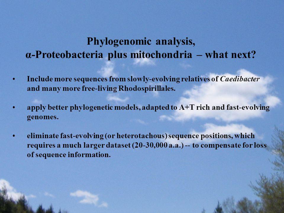 Phylogenomic analysis, α-Proteobacteria plus mitochondria – what next.