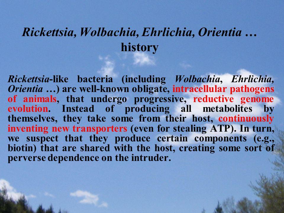 Rickettsia, Wolbachia, Ehrlichia, Orientia … history Rickettsia-like bacteria (including Wolbachia, Ehrlichia, Orientia …) are well-known obligate, intracellular pathogens of animals, that undergo progressive, reductive genome evolution.