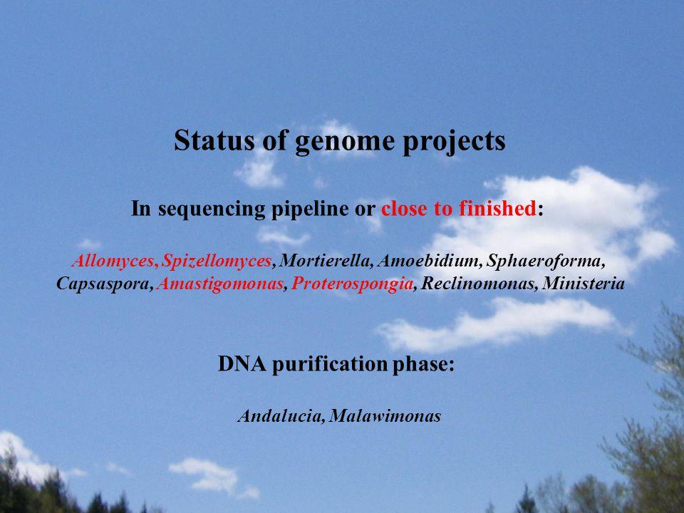 Status of genome projects In sequencing pipeline or close to finished: Allomyces, Spizellomyces, Mortierella, Amoebidium, Sphaeroforma, Capsaspora, Amastigomonas, Proterospongia, Reclinomonas, Ministeria DNA purification phase: Andalucia, Malawimonas