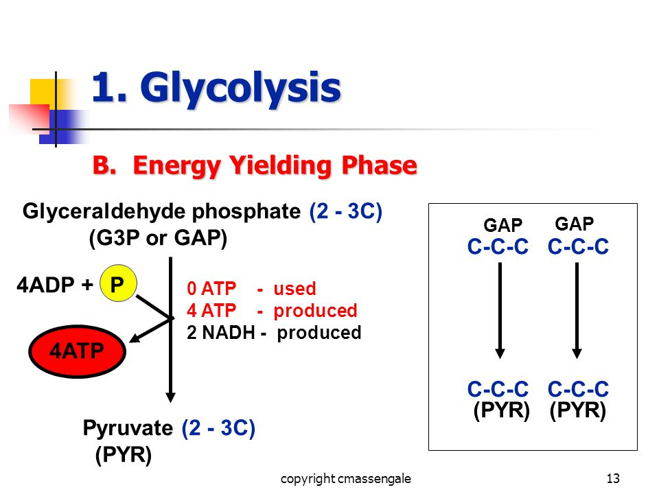 13 1. Glycolysis B. Energy Yielding Phase Glyceraldehyde phosphate (2 - 3C) (G3P or GAP) Pyruvate (2 - 3C) (PYR) 0 ATP - used 4 ATP - produced 2 NADH