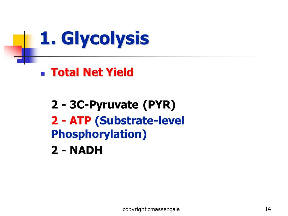 14 1. Glycolysis Total Net Yield Total Net Yield 2 - 3C-Pyruvate (PYR) 2 - ATP (Substrate-level Phosphorylation) 2 - NADH copyright cmassengale