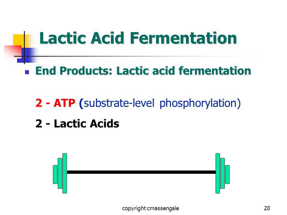 20 Lactic Acid Fermentation End Products: Lactic acid fermentation End Products: Lactic acid fermentation 2 - ATP (substrate-level phosphorylation) 2 - Lactic Acids copyright cmassengale