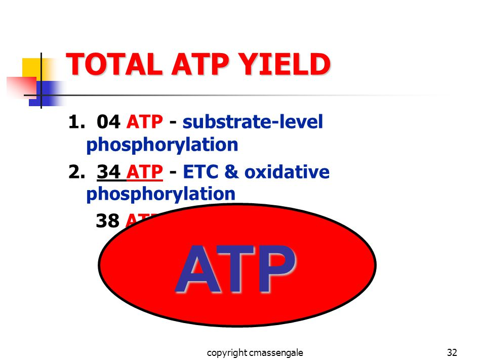 32 TOTAL ATP YIELD 1. 04 ATP - substrate-level phosphorylation 2.