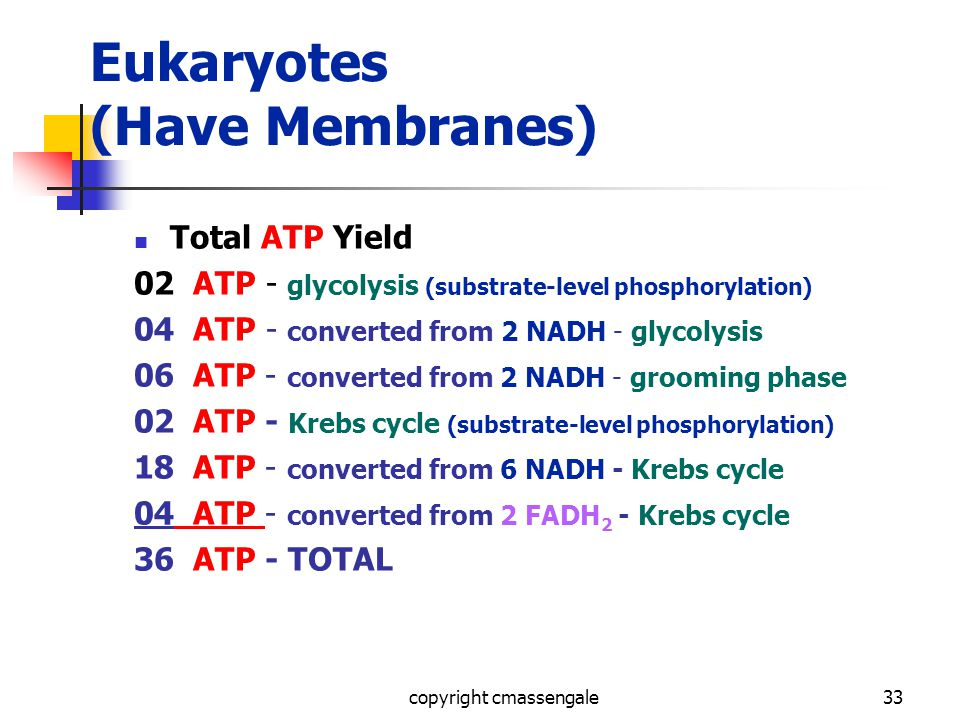 33 Eukaryotes (Have Membranes) Total ATP Yield 02 ATP - glycolysis (substrate-level phosphorylation) 04 ATP - converted from 2 NADH - glycolysis 06 ATP - converted from 2 NADH - grooming phase 02 ATP - Krebs cycle (substrate-level phosphorylation) 18 ATP - converted from 6 NADH - Krebs cycle 04 ATP - converted from 2 FADH 2 - Krebs cycle 36 ATP - TOTAL copyright cmassengale