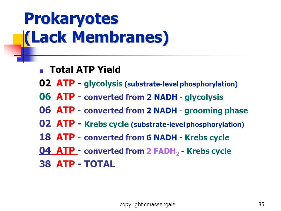 35 Prokaryotes (Lack Membranes) Total ATP Yield 02 ATP - glycolysis (substrate-level phosphorylation) 06 ATP - converted from 2 NADH - glycolysis 06 ATP - converted from 2 NADH - grooming phase 02 ATP - Krebs cycle (substrate-level phosphorylation) 18 ATP - converted from 6 NADH - Krebs cycle 04 ATP - converted from 2 FADH 2 - Krebs cycle 38 ATP - TOTAL copyright cmassengale