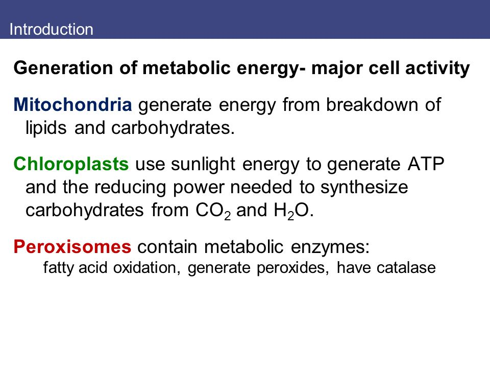 Introduction Generation of metabolic energy- major cell activity Mitochondria generate energy from breakdown of lipids and carbohydrates. Chloroplasts