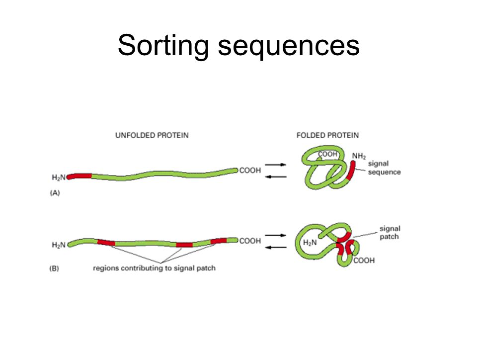 Sorting sequences