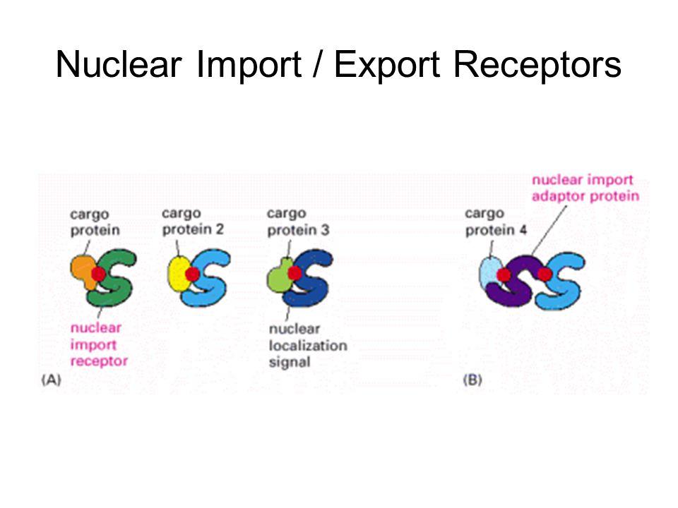 Nuclear Import / Export Receptors