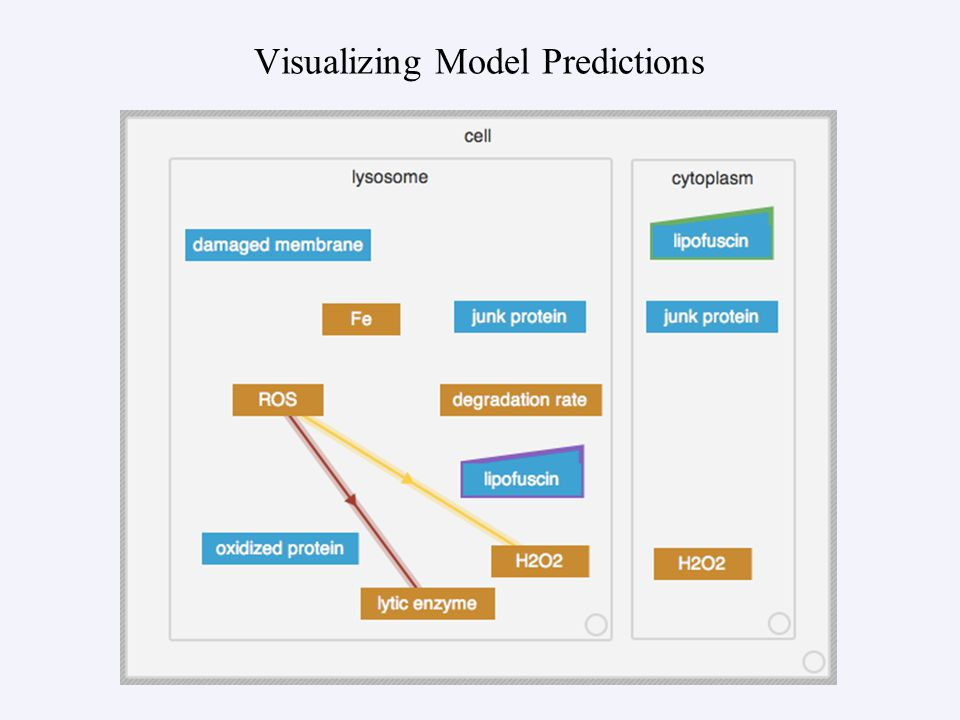 Visualizing Model Predictions