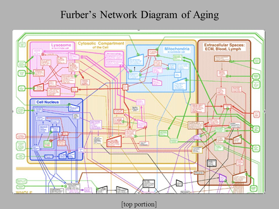 Furber's Network Diagram of Aging [top portion]