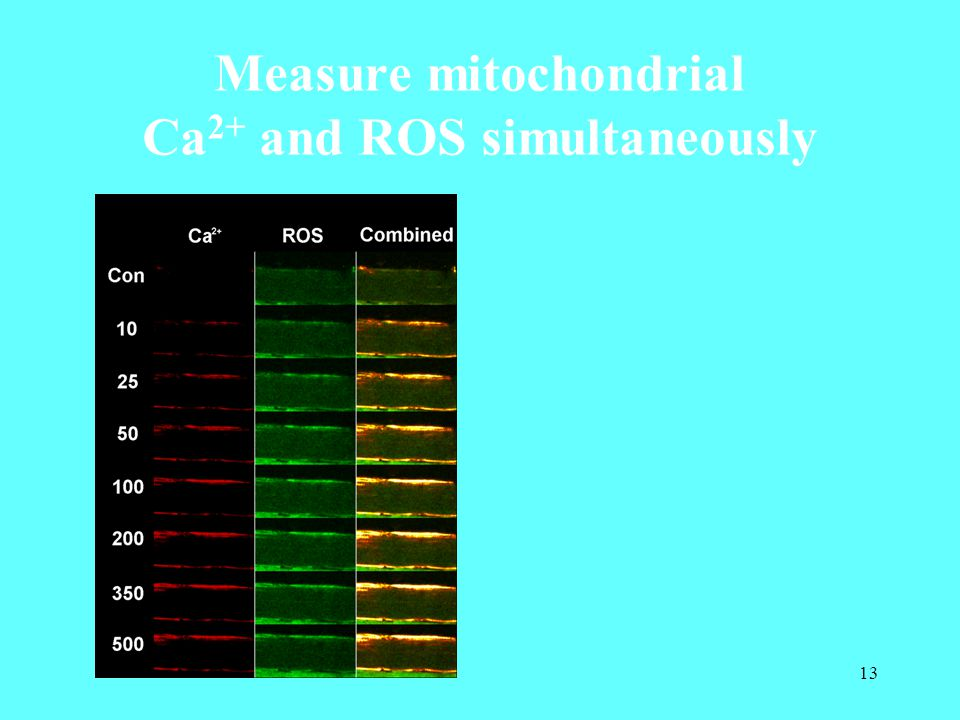 13 Measure mitochondrial Ca 2+ and ROS simultaneously