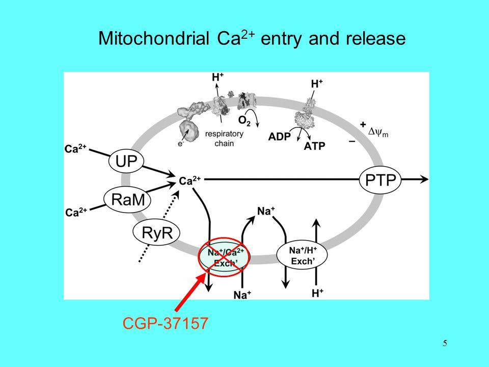 6 Blocking Ca 2+ entry and exit  Depolarise mitochondria: FCCP  Inhibit Ca 2+ uniporter: Ru360  Na + -Ca 2+ exchanger: CGP37157  H + -Ca 2+ exchanger .