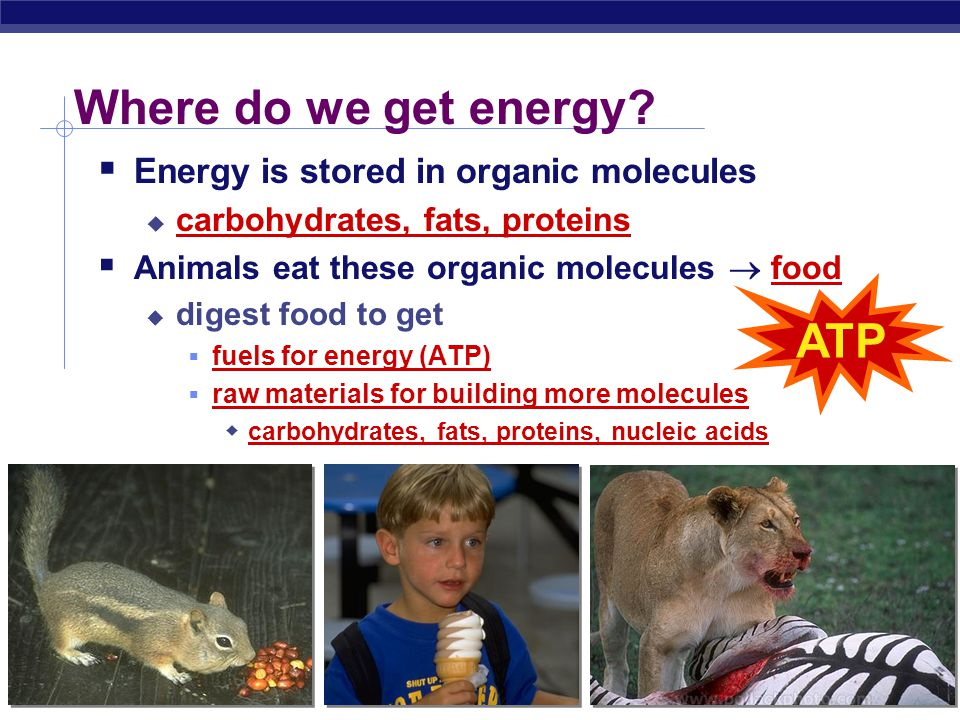 Regents Biology Energy needs of life  All organisms need energy.