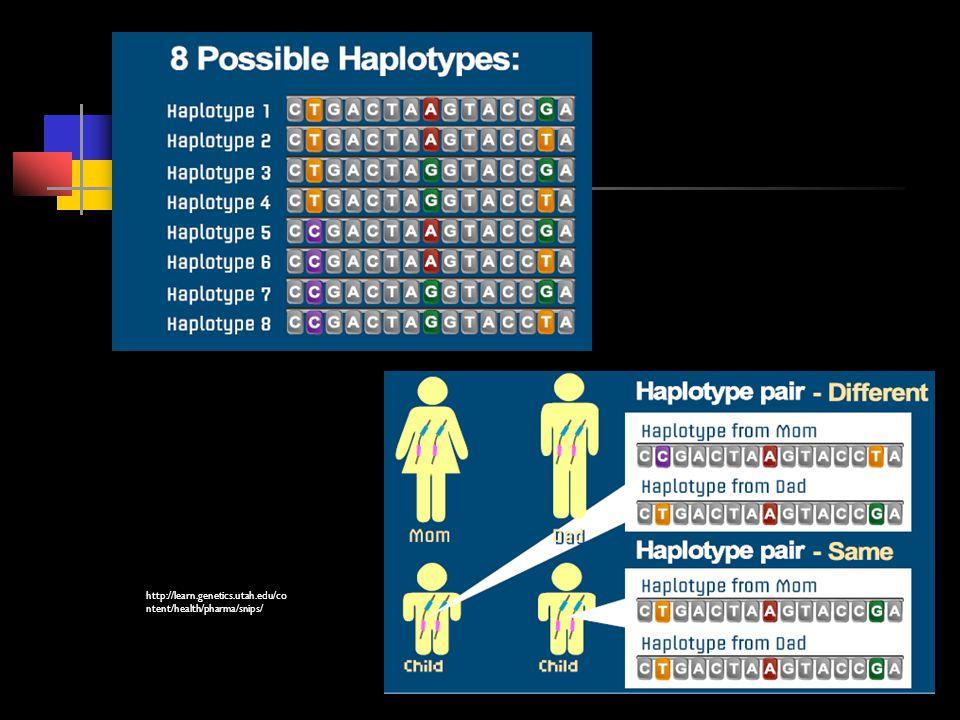 http://learn.genetics.utah.edu/co ntent/health/pharma/snips/