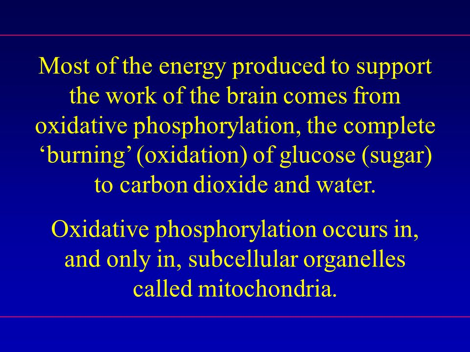 Most of the energy produced to support the work of the brain comes from oxidative phosphorylation, the complete 'burning' (oxidation) of glucose (sugar) to carbon dioxide and water.