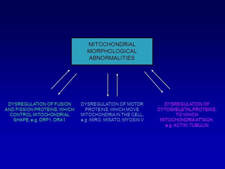 MITOCHONDRIAL MORPHOLOGICAL ABNORMALITIES DYSREGULATION OF FUSION AND FISSION PROTEINS, WHICH CONTROL MITOCHONDRIAL SHAPE, e.g.