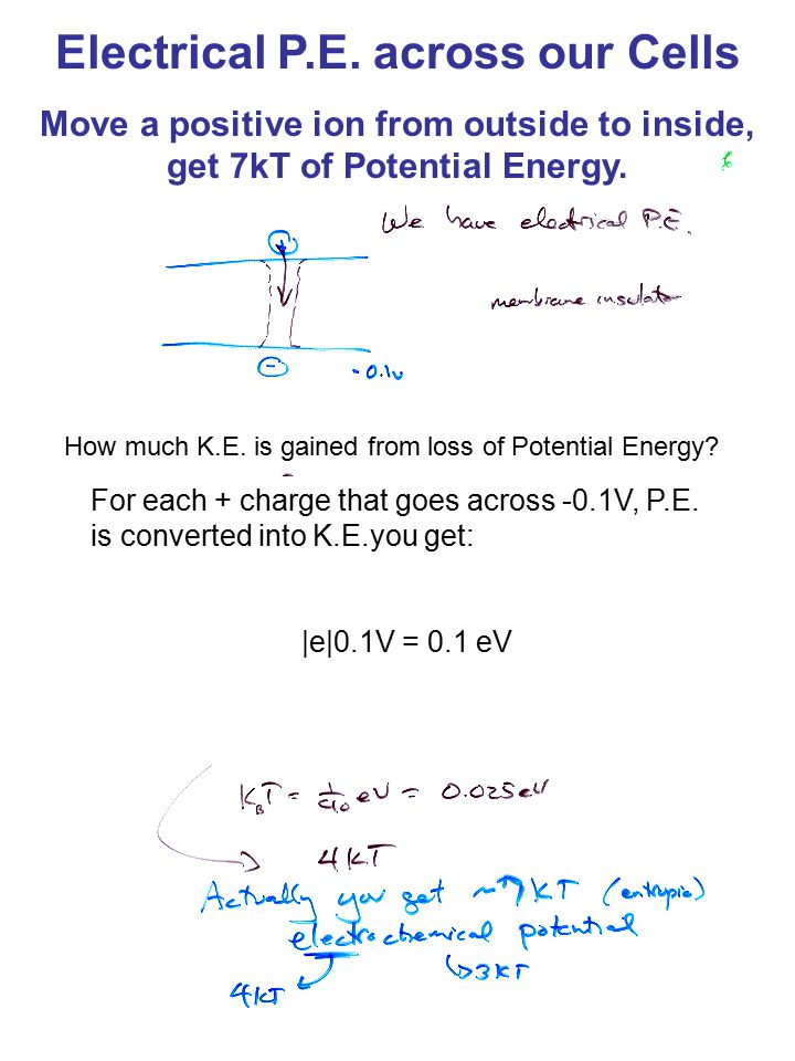 Electrical P.E.