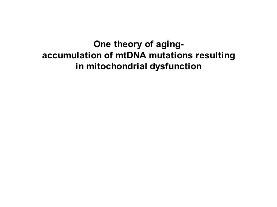 One theory of aging- accumulation of mtDNA mutations resulting in mitochondrial dysfunction