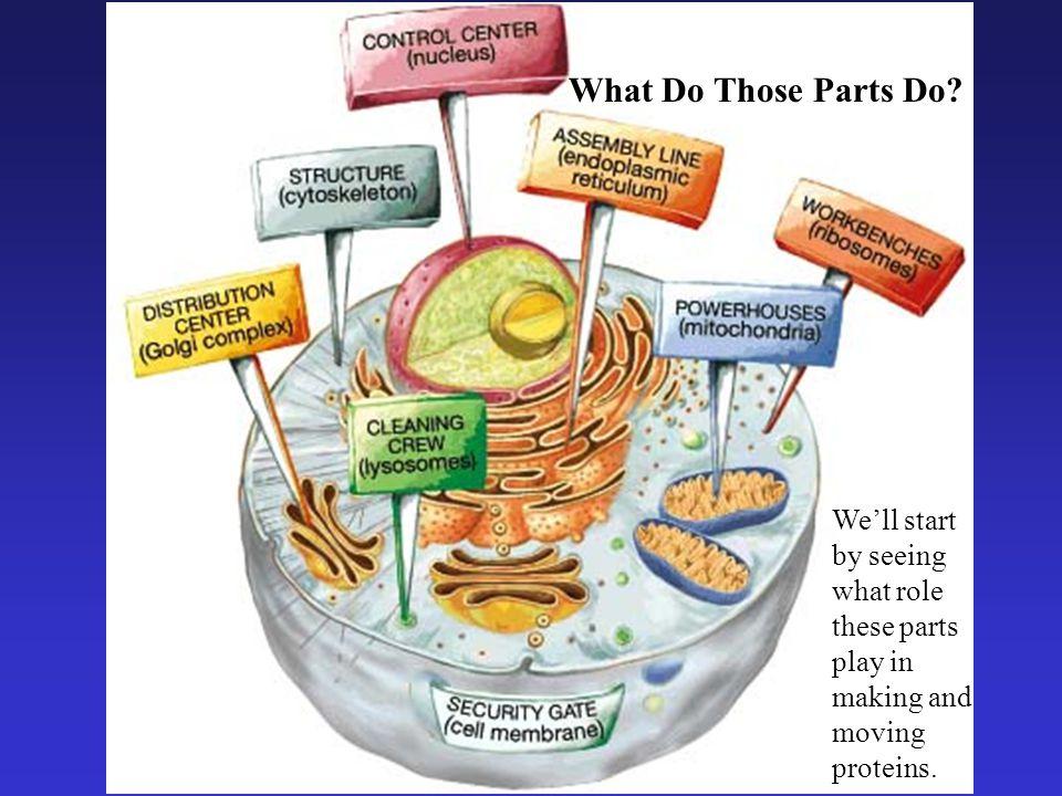 What Do Those Parts Do.