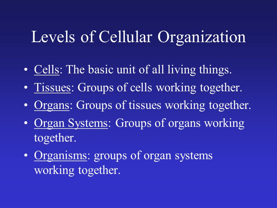 Levels of Cellular Organization Cells: The basic unit of all living things.