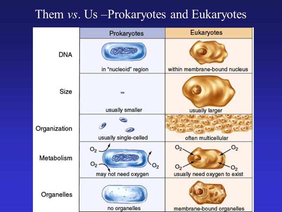 Them vs. Us –Prokaryotes and Eukaryotes