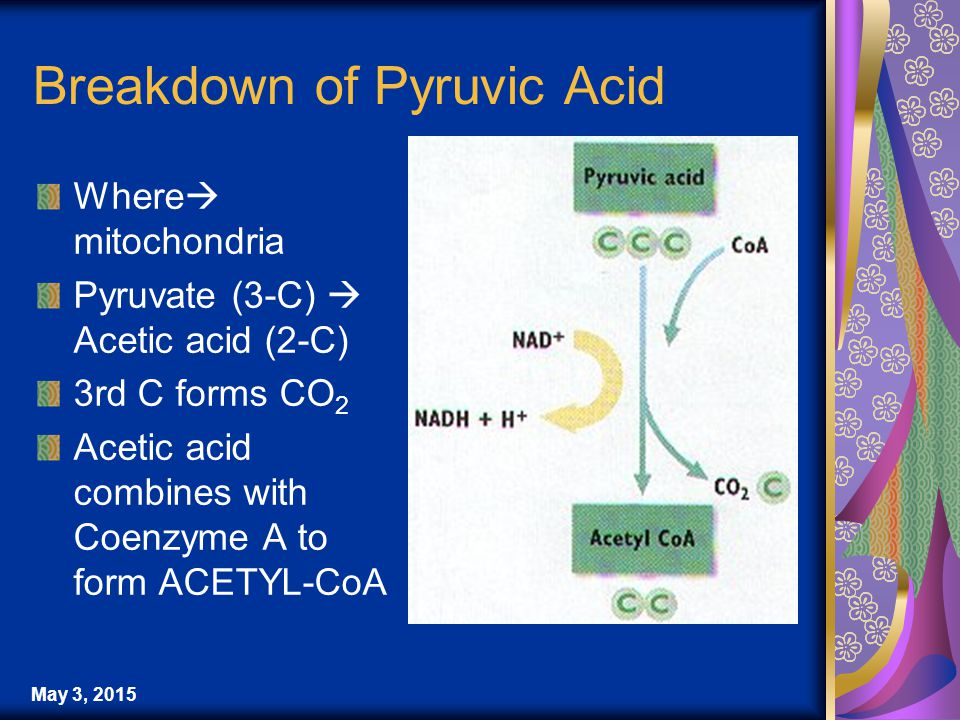 May 3, 2015 Breakdown of Pyruvic Acid Where  mitochondria Pyruvate (3-C)  Acetic acid (2-C) 3rd C forms CO 2 Acetic acid combines with Coenzyme A to form ACETYL-CoA