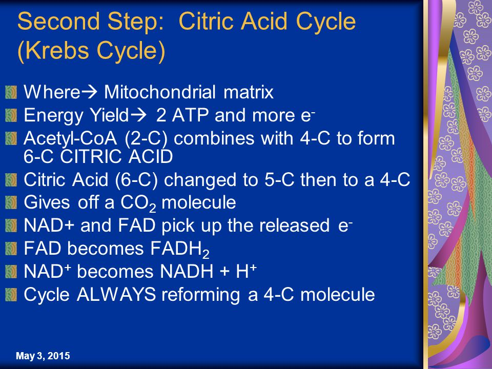 May 3, 2015 Second Step: Citric Acid Cycle (Krebs Cycle) Where  Mitochondrial matrix Energy Yield  2 ATP and more e - Acetyl-CoA (2-C) combines with 4-C to form 6-C CITRIC ACID Citric Acid (6-C) changed to 5-C then to a 4-C Gives off a CO 2 molecule NAD+ and FAD pick up the released e - FAD becomes FADH 2 NAD + becomes NADH + H + Cycle ALWAYS reforming a 4-C molecule