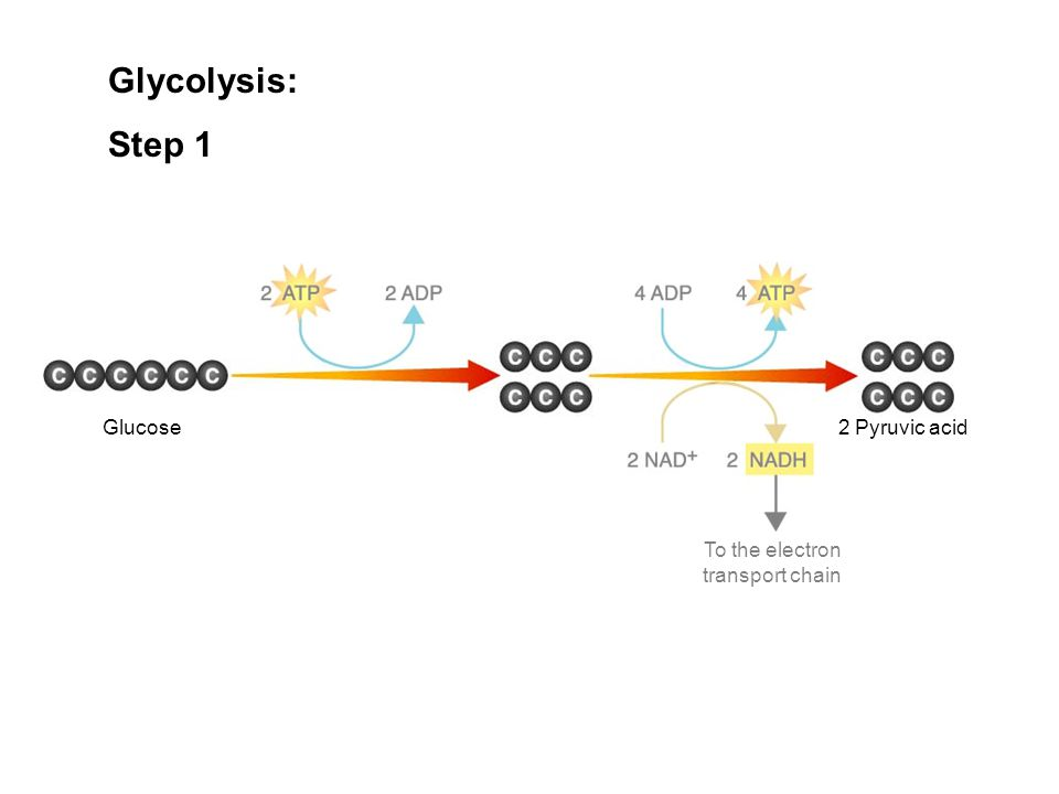 Glucose To the electron transport chain Figure 9–3 Glycolysis Glycolysis: Step 1 2 Pyruvic acid