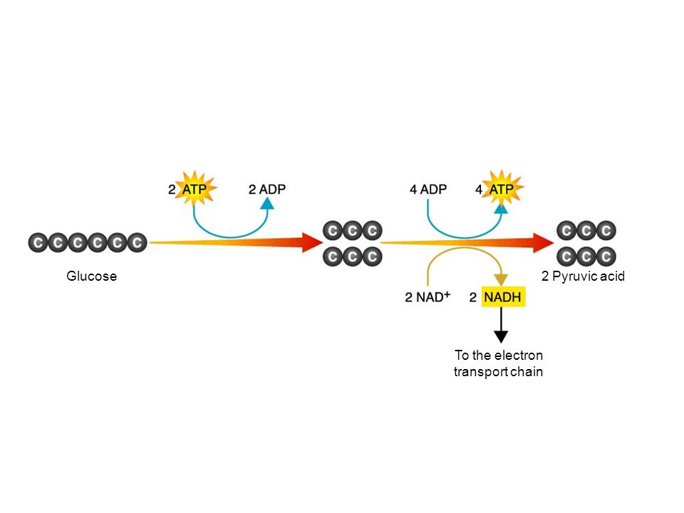 Glucose To the electron transport chain Figure 9–3 Glycolysis Section 9-1 2 Pyruvic acid