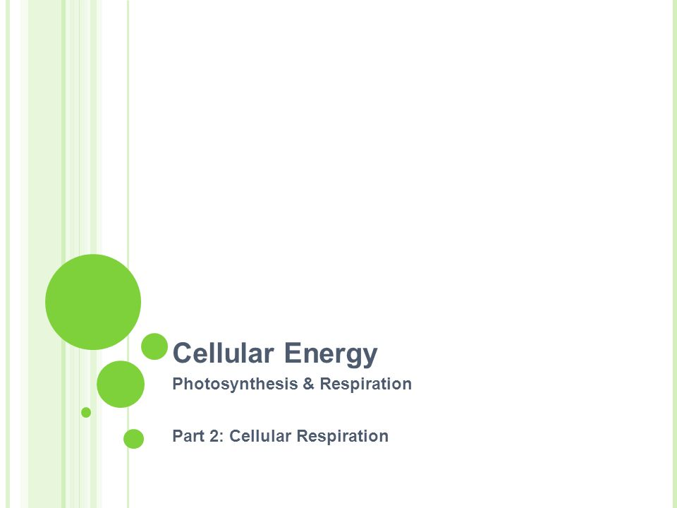 How are photosynthesis and respiration linked?