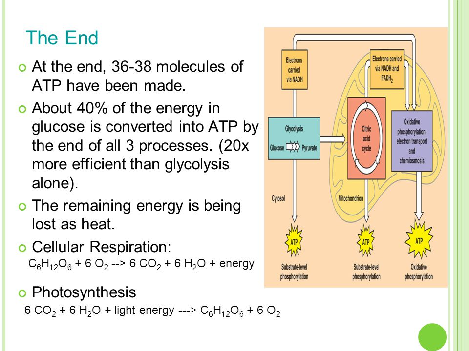 The End At the end, 36-38 molecules of ATP have been made. About 40% of the energy in glucose is converted into ATP by the end of all 3 processes. (20