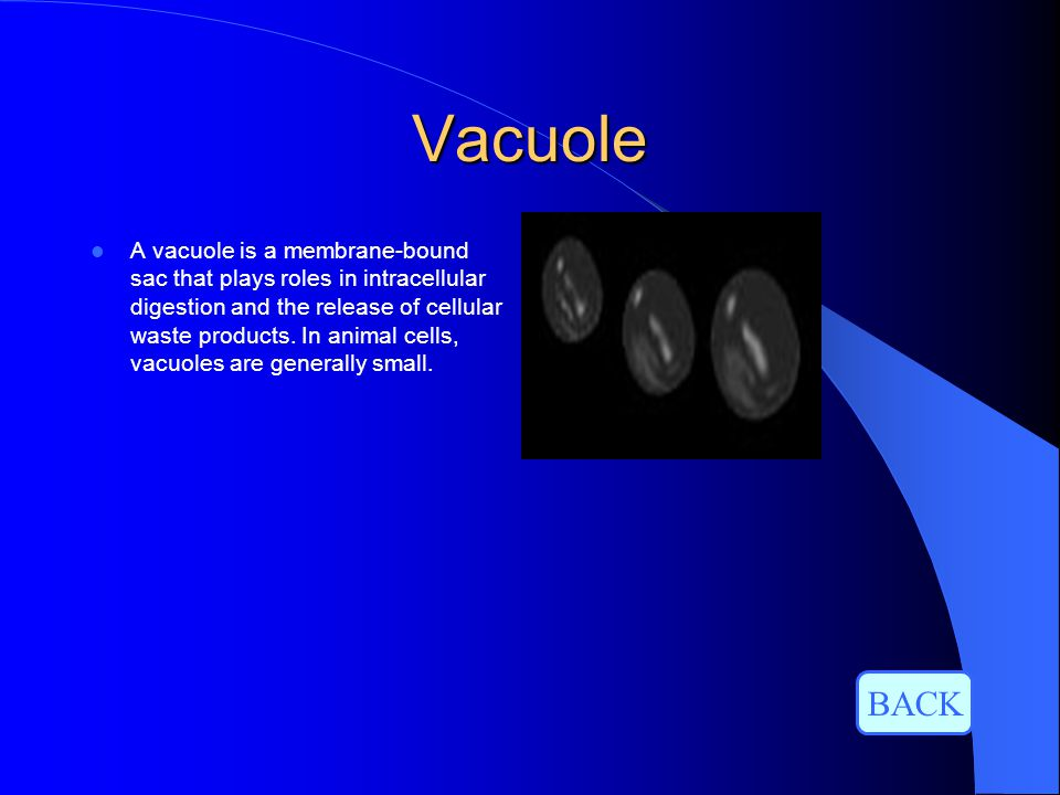Vacuole A vacuole is a membrane-bound sac that plays roles in intracellular digestion and the release of cellular waste products. In animal cells, vac