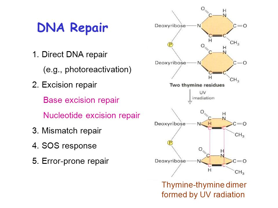 DNA Repair 1. Direct DNA repair (e.g., photoreactivation) 2.