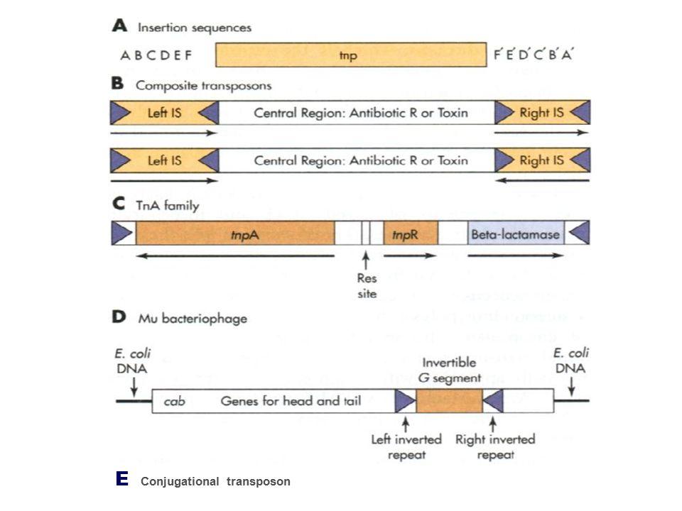 E Conjugational transposon